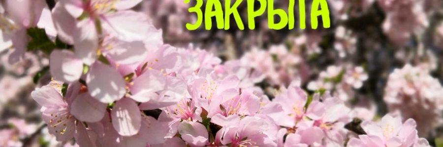 1-5 мая: режим работы Лавки.